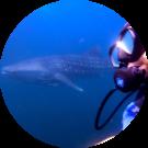 Clem Diver Avatar